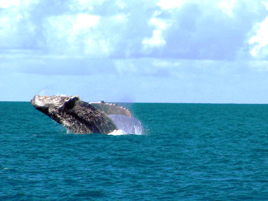 observatório-de-baleias-porto-seguro