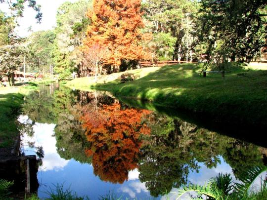 what-do-in-Felder-of-jordan-Garten-Wald