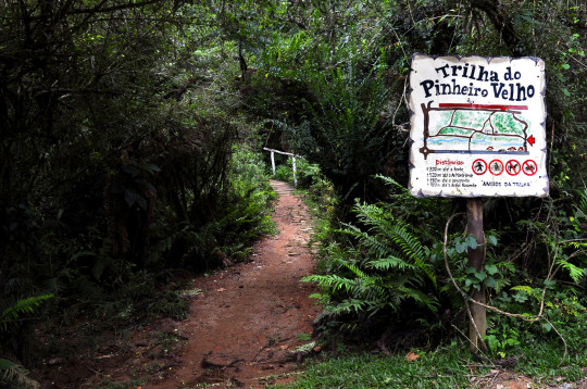 trilha-do-pinheiro-velho-pousada-suica-mineira