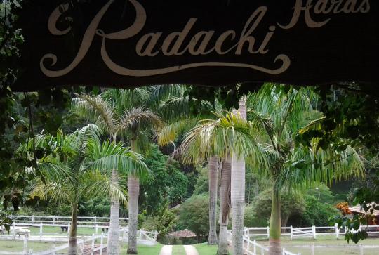 haras-radachi
