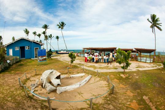www.tamar.org.br