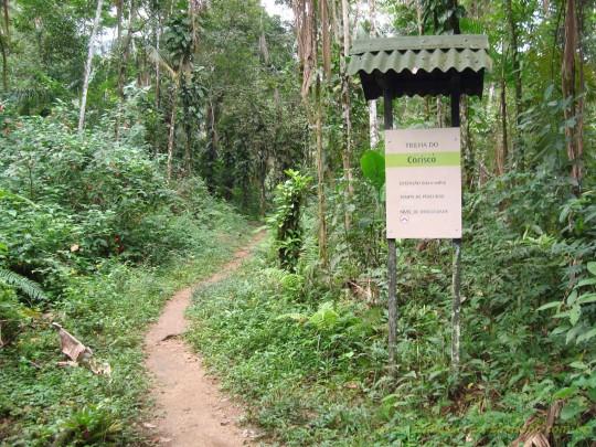 o-que-fazer-paraty-trekking-trilha