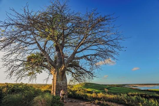pontos-turísticos-porto-de-galinhas-baobá