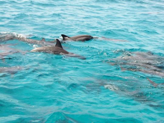o-que-fazer-praia-da-pipa-golfinho