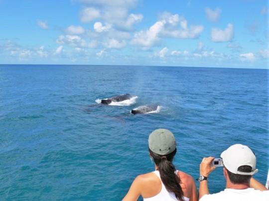 observacao-baleias-porto-seguro