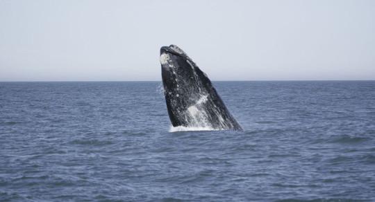 onde-se-divertir-em-garopaba-baleias